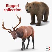 Sammlung von 3D-Modellen mit Bären und Elchen 3d model