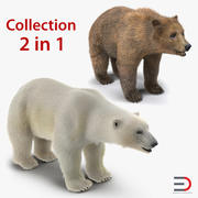 Brown and Polar Bears 3D Models Collection 3d model