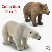 Kolekcja modeli 3D niedźwiedzi brunatnych i polarnych 3d model