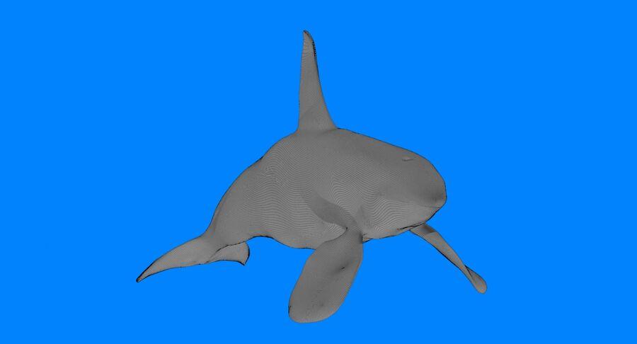Orca macho touro royalty-free 3d model - Preview no. 13
