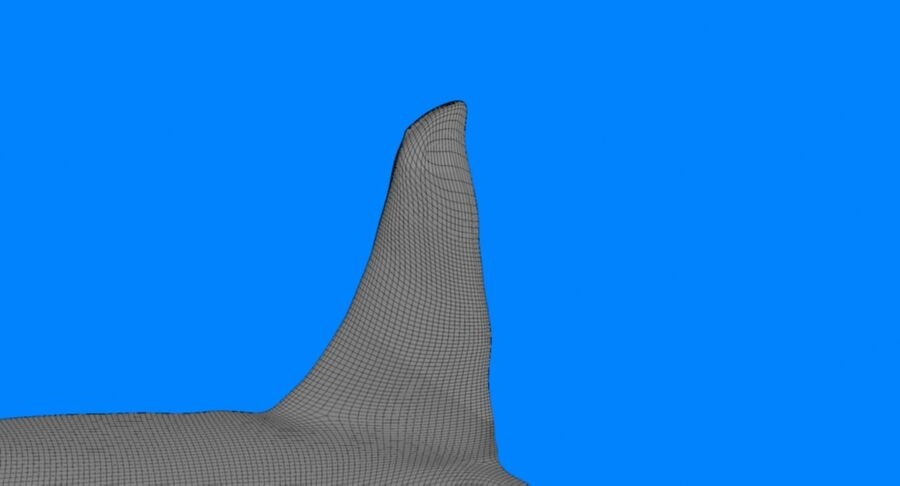 Orca macho touro royalty-free 3d model - Preview no. 6