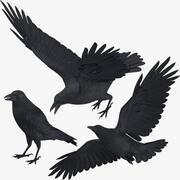 Crow 3 Poses 3d model