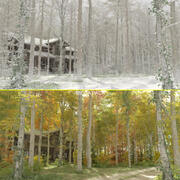 Floresta de choupos 3d model