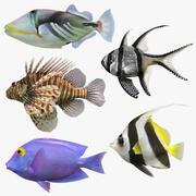 Tuzlu Su Balıkları Koleksiyonu 3d model