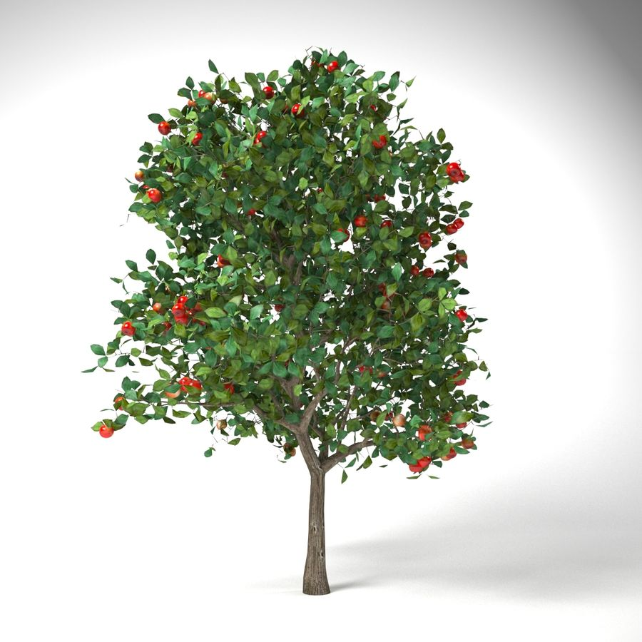 malus 3.7 meter apple tree royalty-free 3d model - Preview no. 4