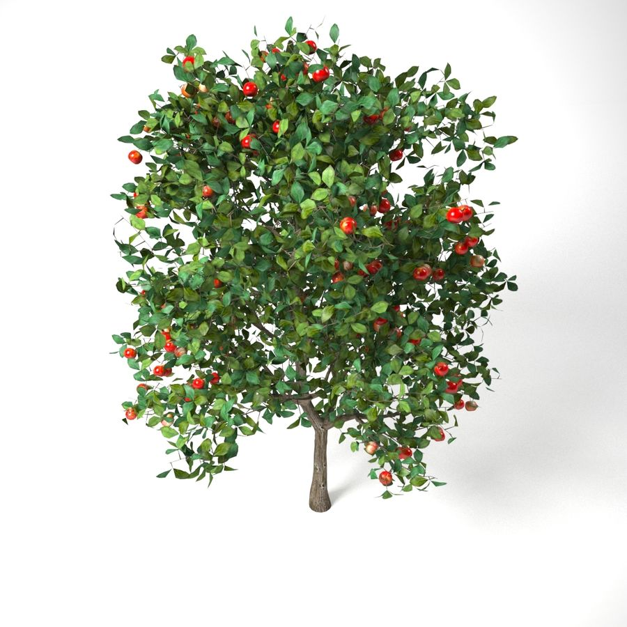 malus 3.7 meter apple tree royalty-free 3d model - Preview no. 6