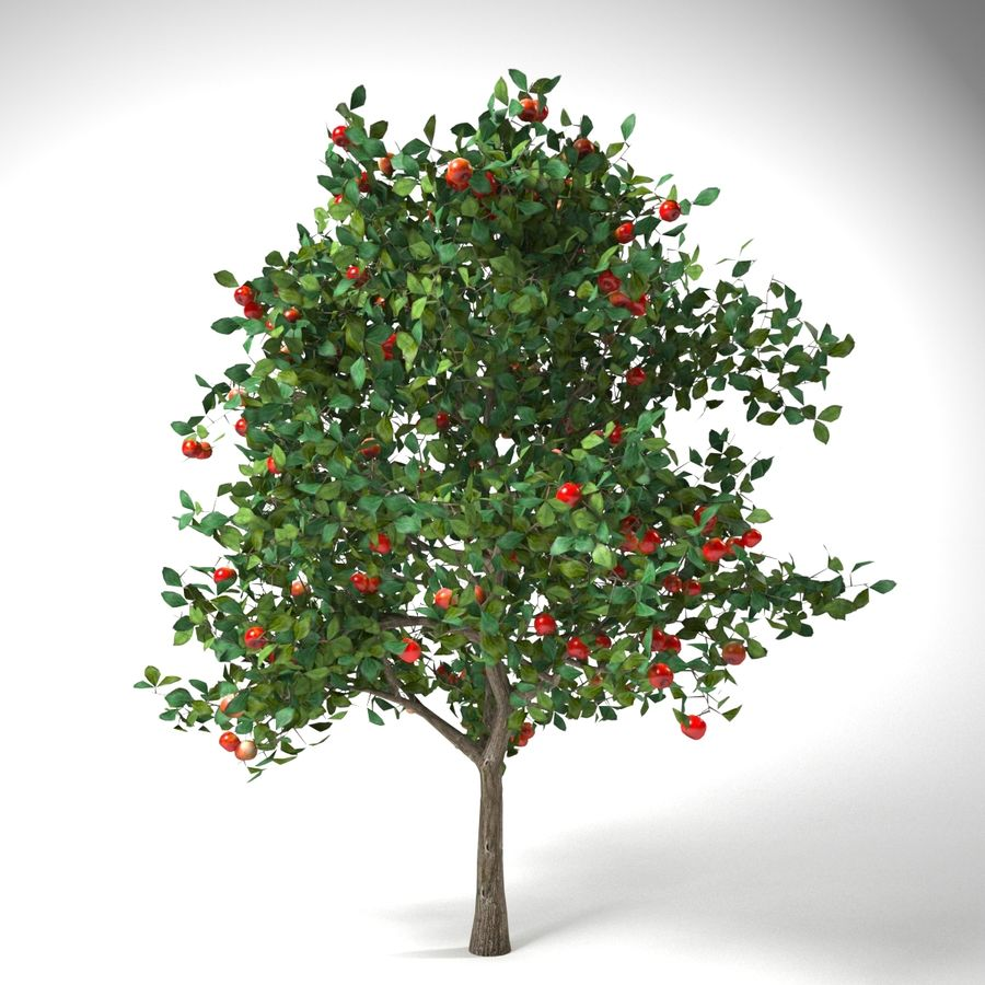malus 3.7 meter apple tree royalty-free 3d model - Preview no. 3