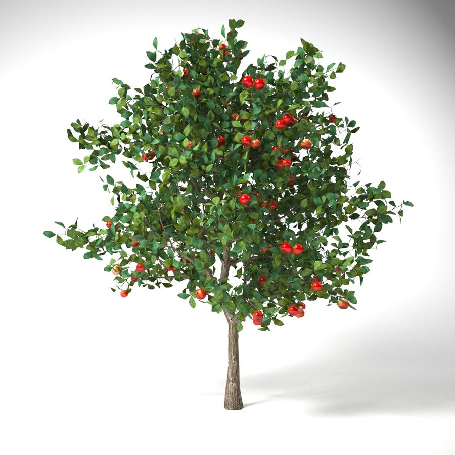 malus 3.7 meter apple tree royalty-free 3d model - Preview no. 5