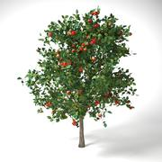 malus 3.7 meter apple tree 3d model