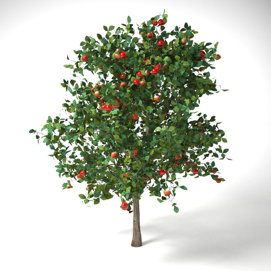 malus 3.7 meter apple tree royalty-free 3d model - Preview no. 1