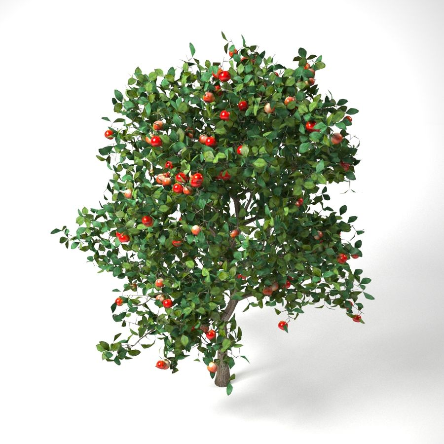 malus 3.7 meter apple tree royalty-free 3d model - Preview no. 2