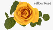 Rose Yellow 3d model