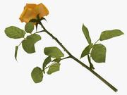 Rose jaune 3d model