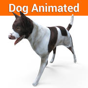 Dog animated 3d model