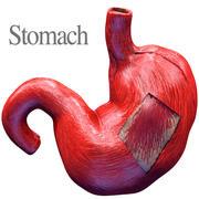 Stomach 3D color 3d model