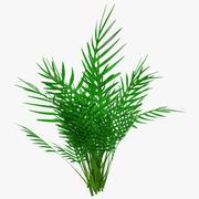 Howea Forsteriana dans la forêt 3d model