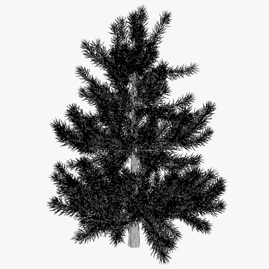 Fir Tree 03 small royalty-free 3d model - Preview no. 5