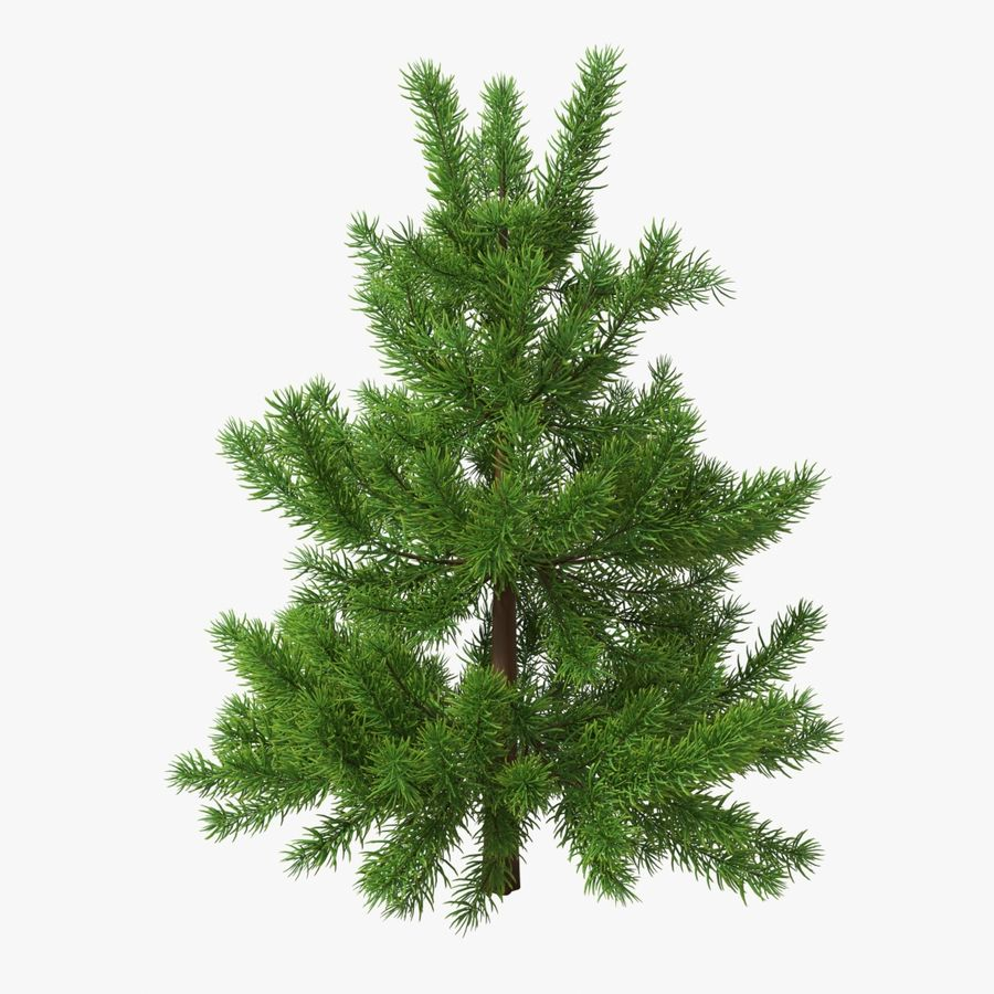 Fir Tree 03 small royalty-free 3d model - Preview no. 3