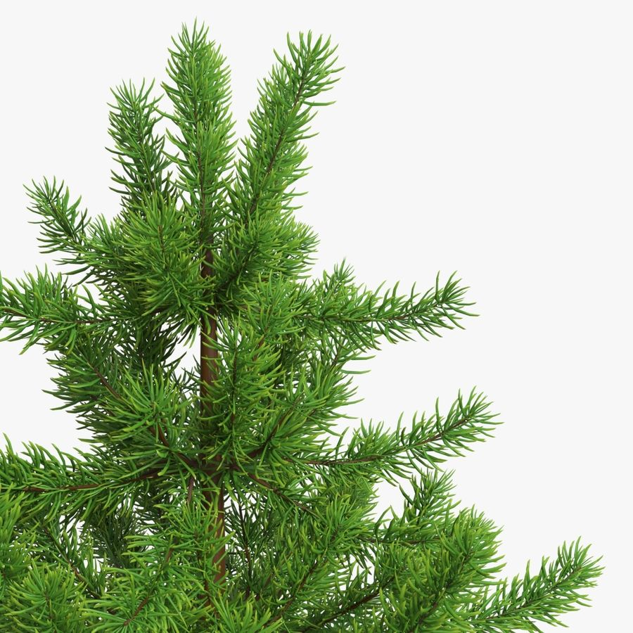 Fir Tree 03 small royalty-free 3d model - Preview no. 4