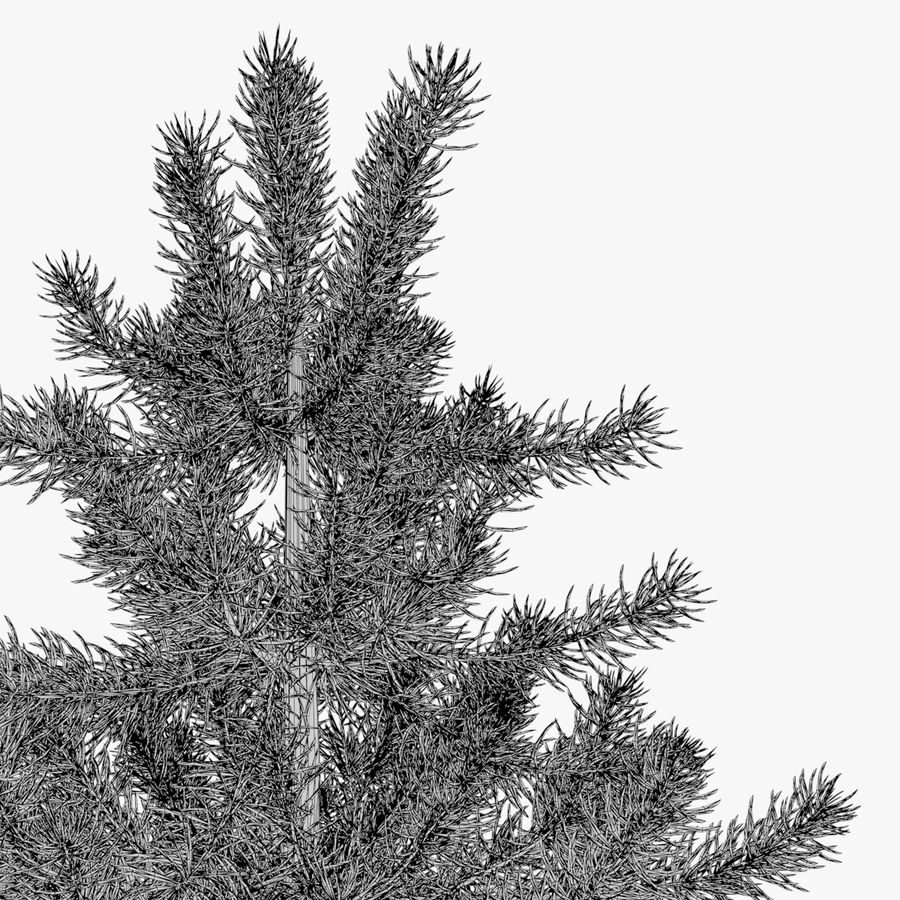 Fir Tree 03 small royalty-free 3d model - Preview no. 6