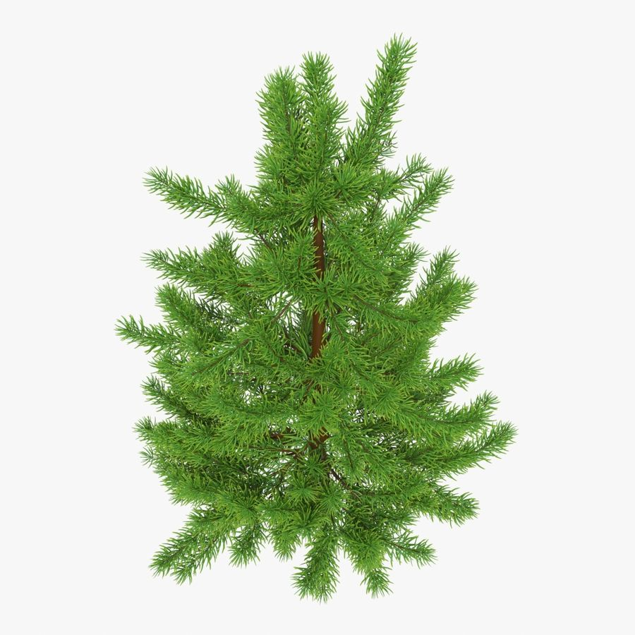 Fir Tree 03 small royalty-free 3d model - Preview no. 2