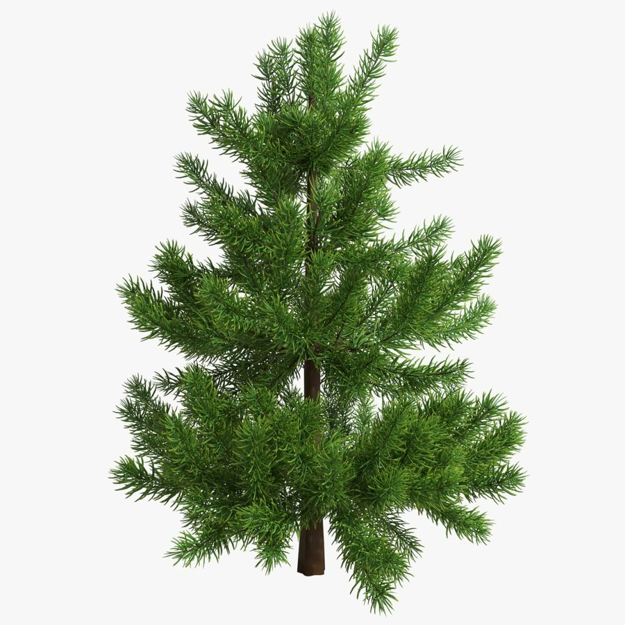 Fir Tree 03 small royalty-free 3d model - Preview no. 1
