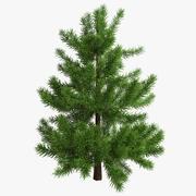 Fir Tree 03 small 3d model