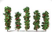 열 사과 나무 세트 malus 3d model