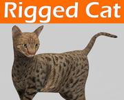 gatto truccato 3d model