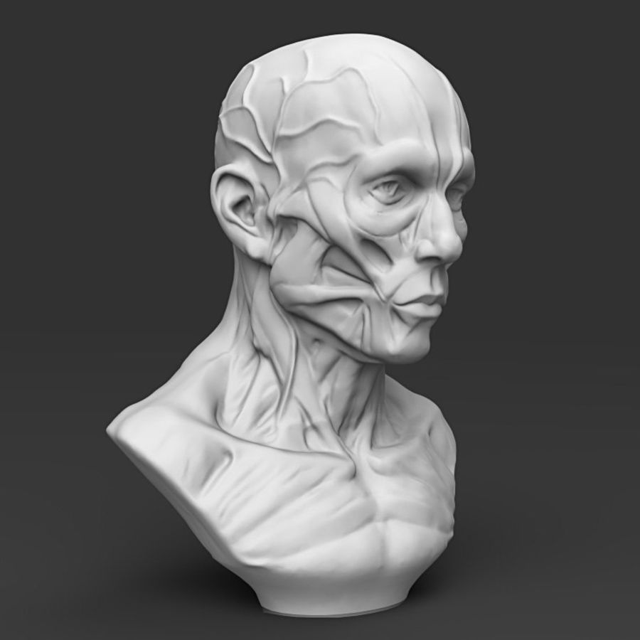 Cabeça masculina royalty-free 3d model - Preview no. 6