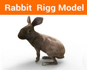rabbit rigged 3d model