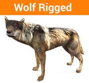 Modelo 3D lobo equipado 3d model