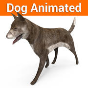 Dog animated 3d model