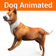 Modello animato di cane 3d model