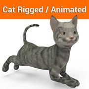 schattige kat opgetuigd geanimeerd 3d model