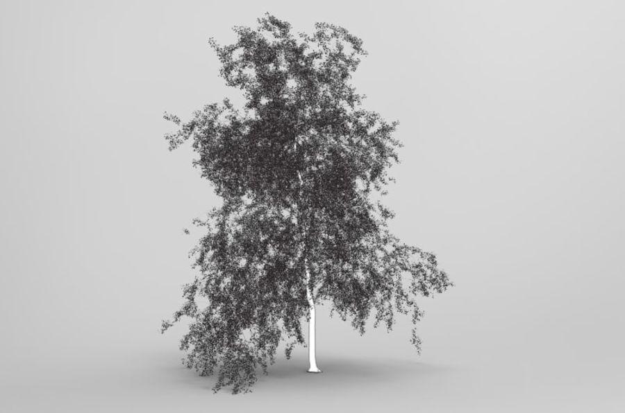 白桦树 royalty-free 3d model - Preview no. 5