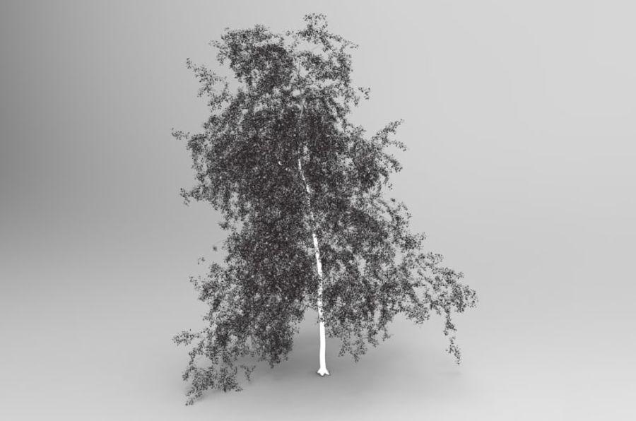 白桦树 royalty-free 3d model - Preview no. 4
