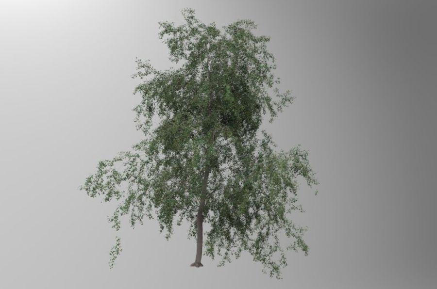 白桦树 royalty-free 3d model - Preview no. 2