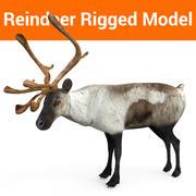 modelo aparejado reno modelo 3d