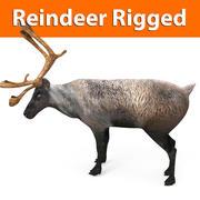 reindeer rigged model 3d model