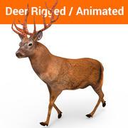 Deer rigged animated model 3d model