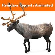 reindeer rigged animated model 3d model
