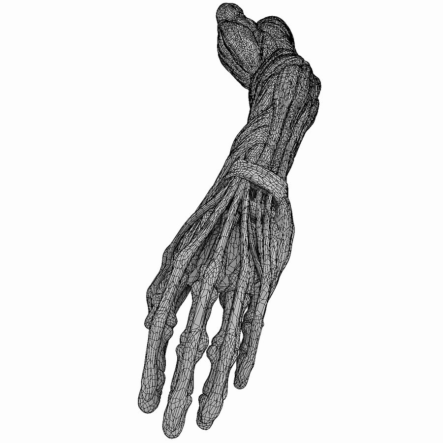 Human Arm Anatomy royalty-free 3d model - Preview no. 9