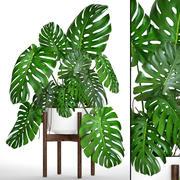 龟背竹(1) 3d model