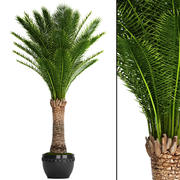 Palma daktylowa 3d model