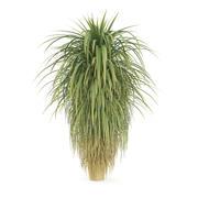Palmträd 3d model