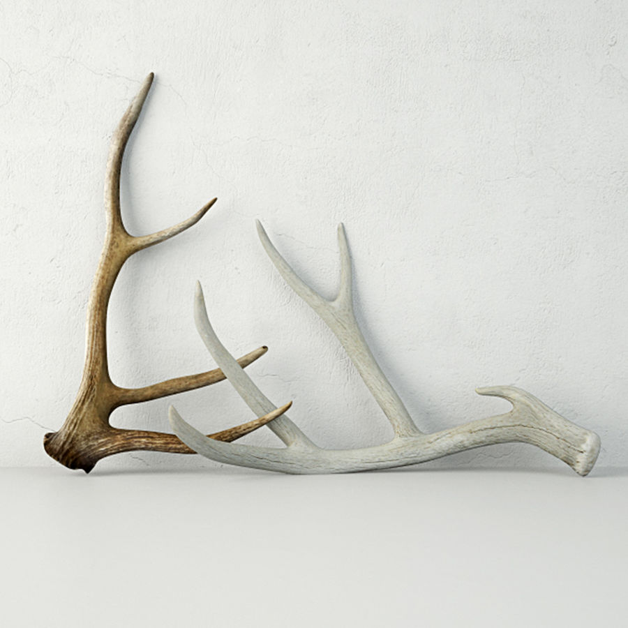 Deer Antlers royalty-free 3d model - Preview no. 1