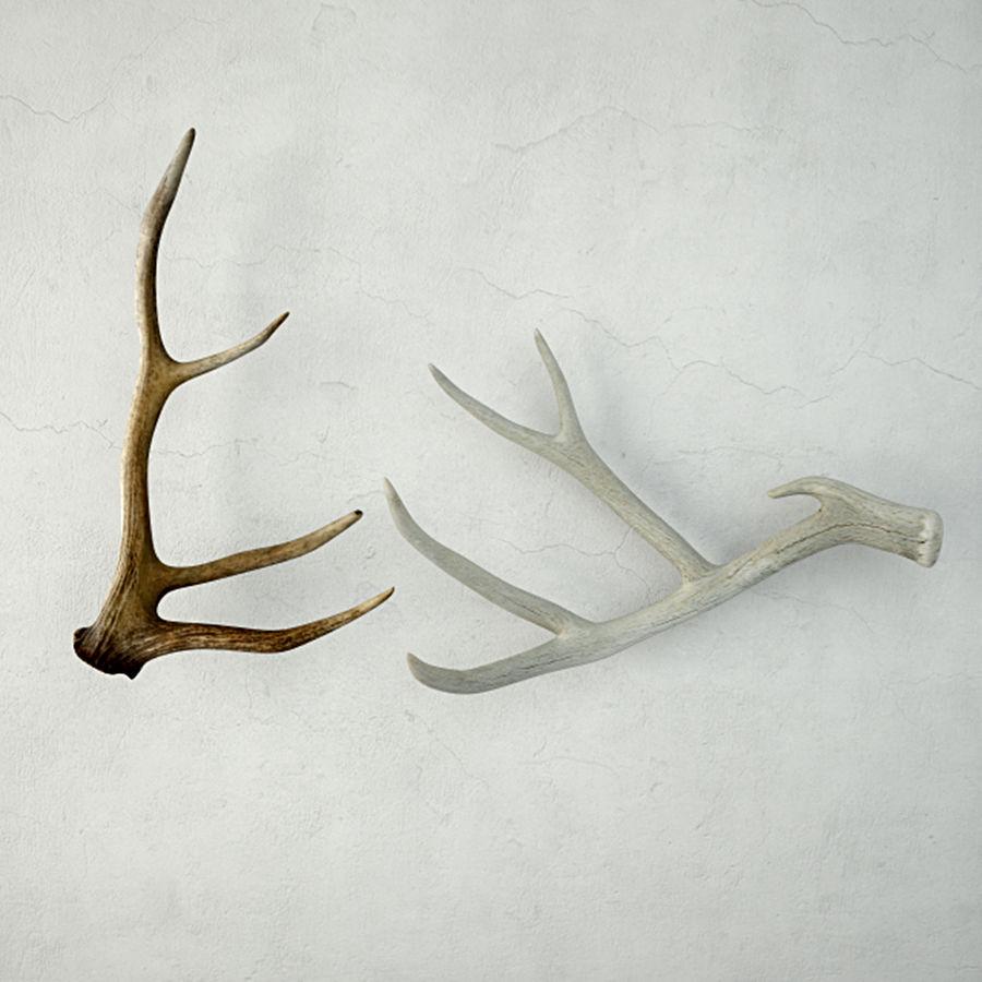 Deer Antlers royalty-free 3d model - Preview no. 2