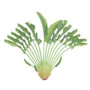 Planta de flor de guindaste 3d model