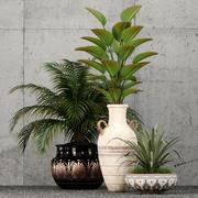 植物采集59 3d model